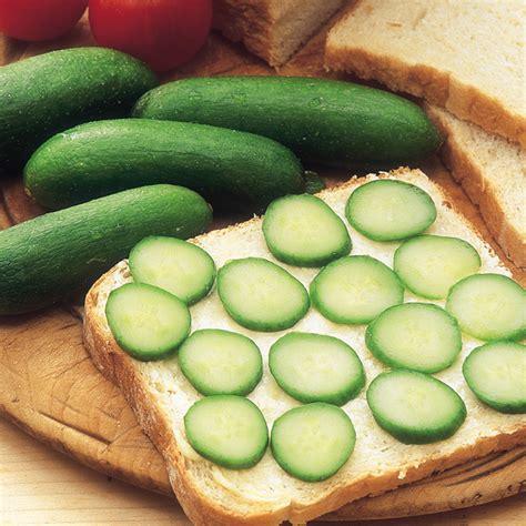 Cucumber Seeds by Cucumber Rocky F1 Seeds Dobies