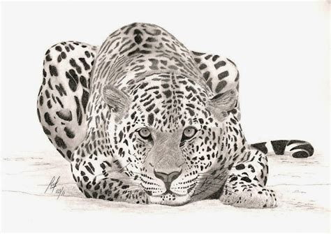 realistic animal drawings