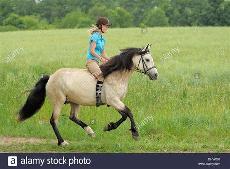 riding bareback   connemara pony cantering stock photo