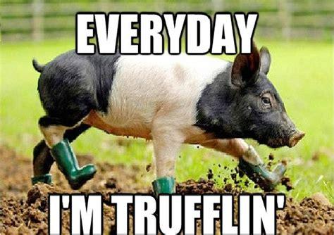 Animal Memes - 13 funny animal memes to make your day