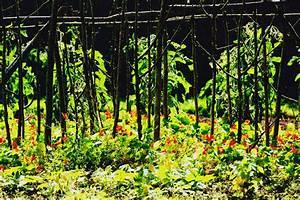 Que Planter En Juin : arbustes l gumes quoi planter en juin ooreka ~ Melissatoandfro.com Idées de Décoration