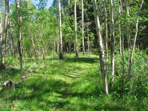 davis meadow trail fourmile area hike  chaffee county