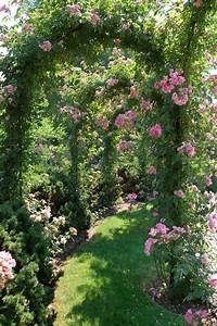Life is an arch of roses — The Lovely Plants
