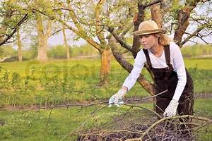 Bäume Beschneiden Jahreszeit : junge frau reinigung ste stockfoto colourbox ~ Yasmunasinghe.com Haus und Dekorationen