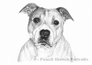 Gallery: Dog Sketches Images, - Drawings Art Gallery