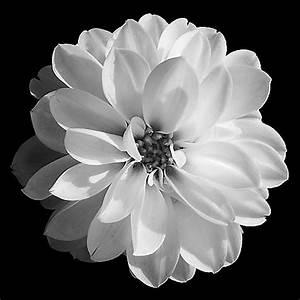 plant illustrations black and white | black and white ...