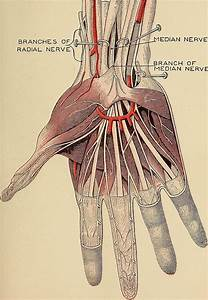 Carpal Tunnel  Is It Causing Shoulder Pain  Anatomy  Tests
