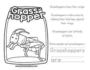 color amp learn bug worksheets preschool 407   ColorGrasshopper
