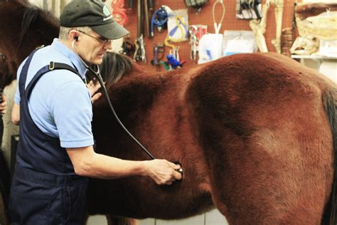 Gas Colic Common But Preventable Nw Horse Source