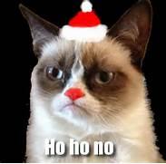 cat pictures grump...