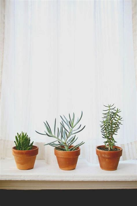 Plants For Windowsill by 352 Best Images About Windowsill Plants On