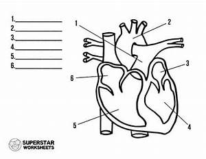 Heart Worksheets