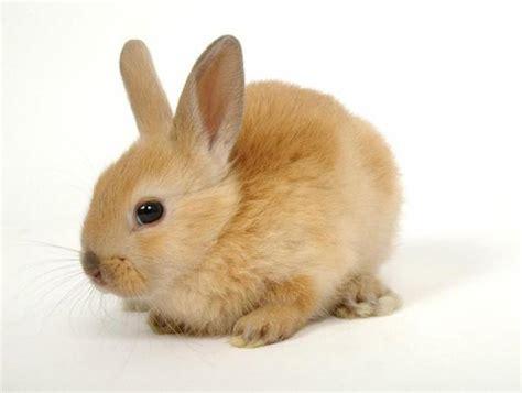 comment s occuper d un lapin domestique 8 233 tapes
