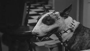 'Frankenweenie' (1984) - Frankenweenie Image (29572842 ...