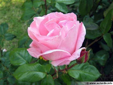 cuisiner le gibier le parfum des roses