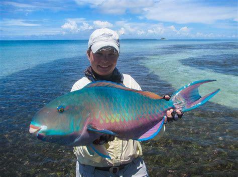 alphonse island resort seychelles tailwaters fly
