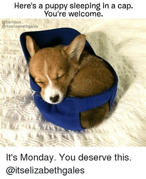 Your Welcome Meme - here s a puppy sleeping in a cap you re welcome barkbox aitselizabethgales it s monday you