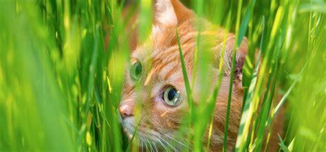 bandwuermer bei katzen ansteckung symptome behandlung