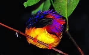 Borneo Rainforest Birds