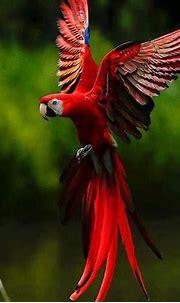nature, Abstract, Flowers, Parrot Wallpapers HD / Desktop ...