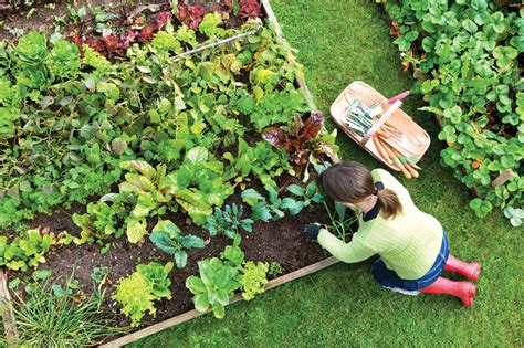 planting a vegetable garden the how to guide for creating a flourishing vegetable garden