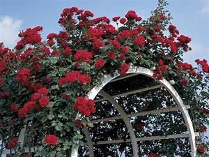 Support Pour Rosier Grimpant : support de plante grimpante types et prix ooreka ~ Premium-room.com Idées de Décoration