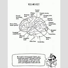 Nervous System Coloring Pages  Coloring Home