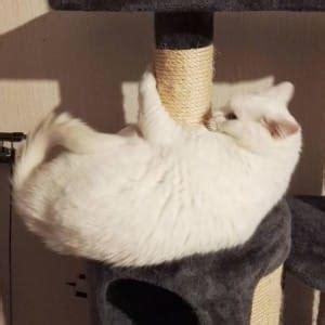 Katze Vom Kratzen Abhalten