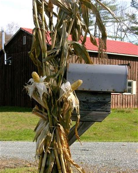where to buy corn stalks for decorating 17 best images about mailbox decorating on