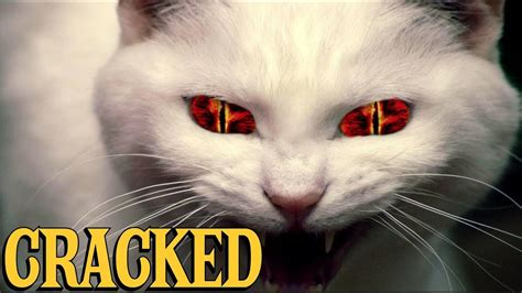 scientific findings  prove cats  evil youtube