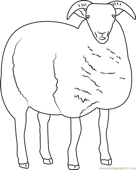 color sheep sheep coloring page free sheep coloring pages