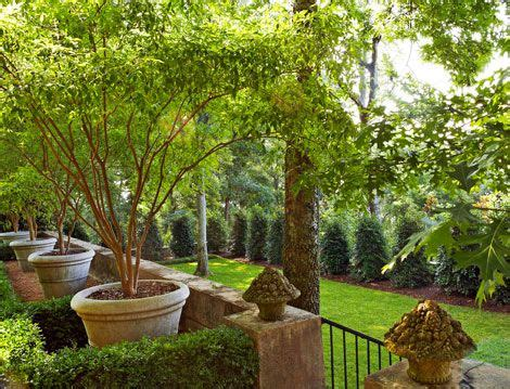 Garden Southern Setting by 1000 Images About Vitex Trees On Gardens