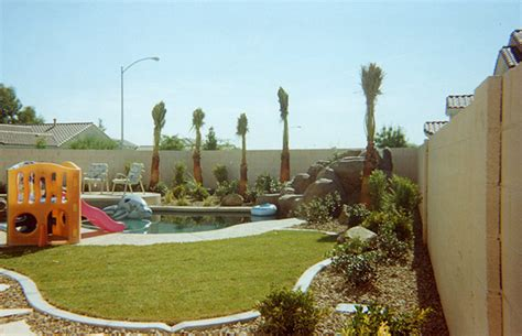 dont plant  trees  las vegas landscaping