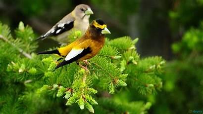 Birds Trees Bird Fence Wallpapersafari Desktopas Res