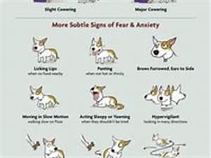 dog tips info