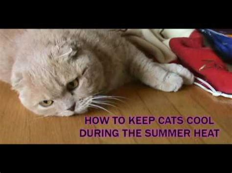 will a heat l keep a dog warm how to keep cats cool during the summer heat weather