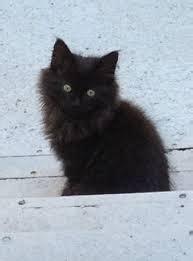 bon coin canapé occasion cherche recherche chaton noir à poils longs à donner pour