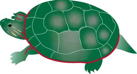Painted Turtle Clip Art at Clker.com - vector clip art ...