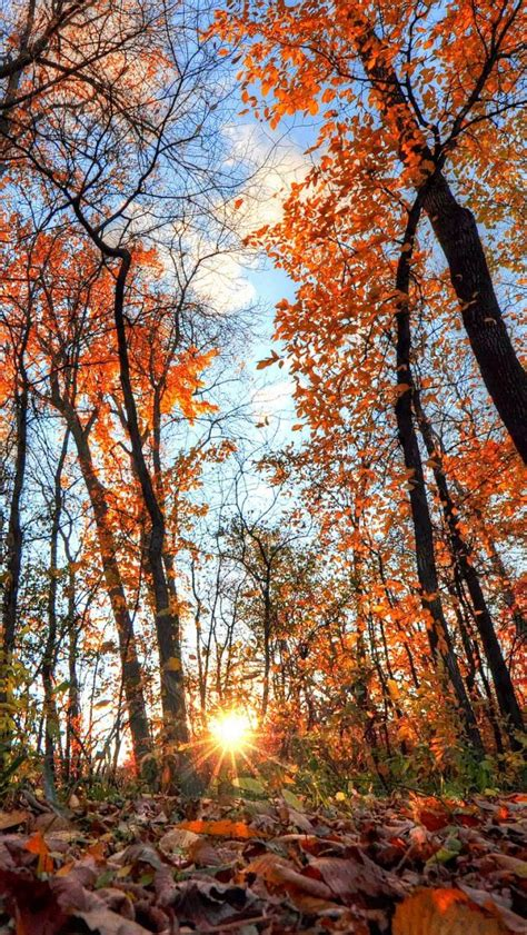 Find the best autumn wallpaper pictures on getwallpapers. 1749 best Phone wallpapers & cases I images on Pinterest | Walls, Free and Funny christmas