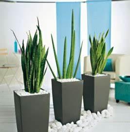 Plante D Intérieur Haute : plante verte haute interieur l 39 atelier des fleurs ~ Premium-room.com Idées de Décoration