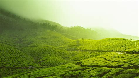 tea plantation  kerala wallpaper wallpaper studio