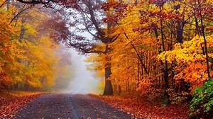 Autumn, Road, Nature, Fall, Trees, Woods, Forest, Mist
