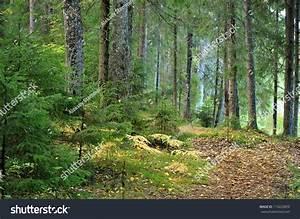 Dark Pine Forest 60263 | NOTEFOLIO