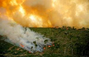 Change Of Mailing Address Letter Fire In The Rainforest The Borneo Project