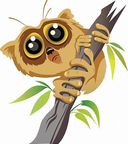 Lemur Madagascar Vector Illustrations Clip Clipart Royalty