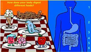 Interactive Human  Digestion Interactive Game For Kids