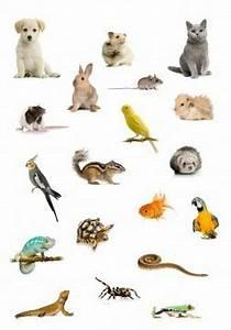 Kingdom Animalia | Characteristics, Kingdom Animalia ...