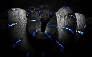 Beautiful Snake Wallpaper HD Images – One HD Wallpaper ...