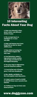 10 interesting facts about your doggyzoo comdoggyzoo