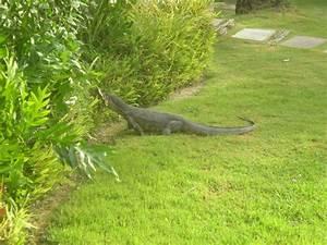 Tiere Im Garten Begraben : tiere im garten hotel the racha racha island ~ Lizthompson.info Haus und Dekorationen